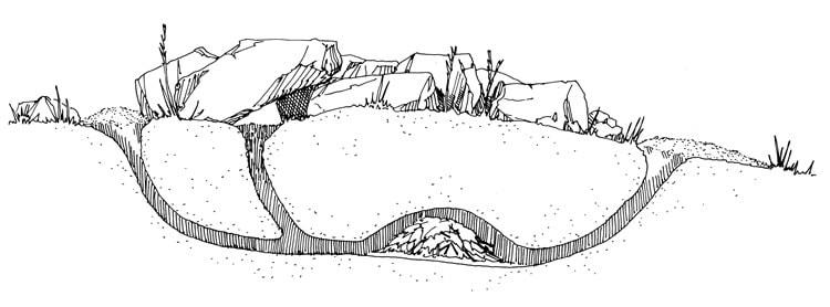 rat burrow structure