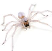spider control Toronto