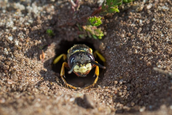 How Do You Get Rid of Ground Wasps?