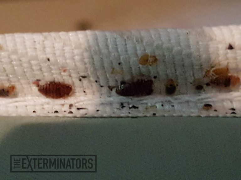 Bed Bugs on Clothes